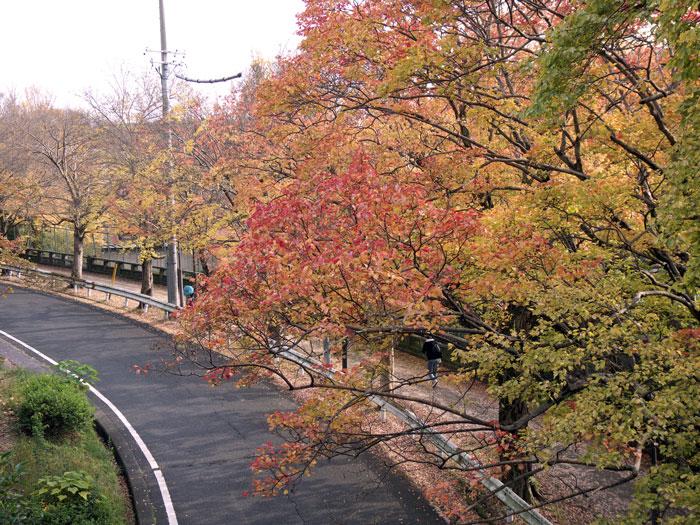 秋の紅葉並木と道路の風景の拡大写真