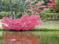自然と植物と紅葉と川の景色