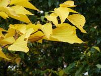 秋の紅葉と黄色の葉