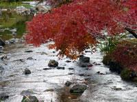 自然な川のせせらぎと紅葉