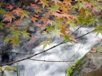 綺麗なモミジと自然の滝と川2