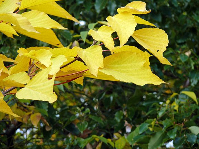 秋の紅葉と黄色の葉の拡大写真