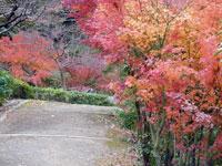 紅葉と道の風景