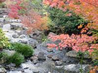 紅葉と小川と自然な水の流れ