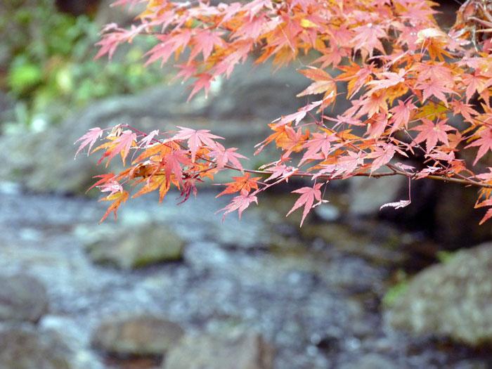 綺麗な紅葉と後ろで流れる自然な小川の拡大写真
