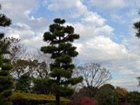 空と松の木と植物の風景