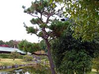 松の木と植物の景色