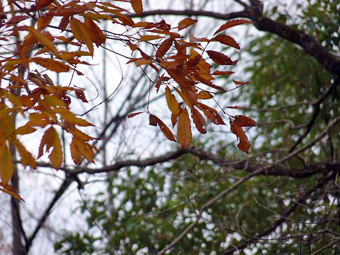 冬の植物と枯れ葉の拡大写真