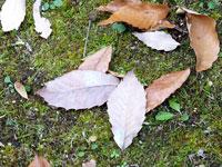 秋から冬にかけて地面に落ちた落ち葉