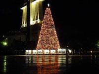 ライトアップされた建物とクリスマスツリー