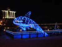 イルカと魚のイルミネーションと建物の夜景