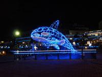 イルカと魚の綺麗なイルミネーションと夜景