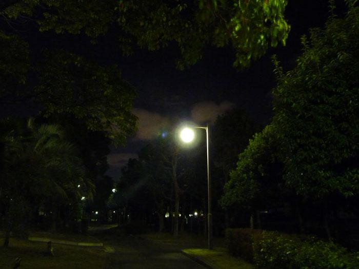 夜の公園の散歩道と街路灯と植物の拡大写真