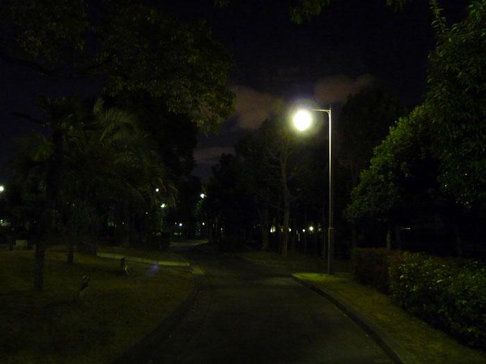 夜の公園の散歩道と街路灯と植物その2の拡大写真