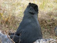 後ろを向いたクマ
