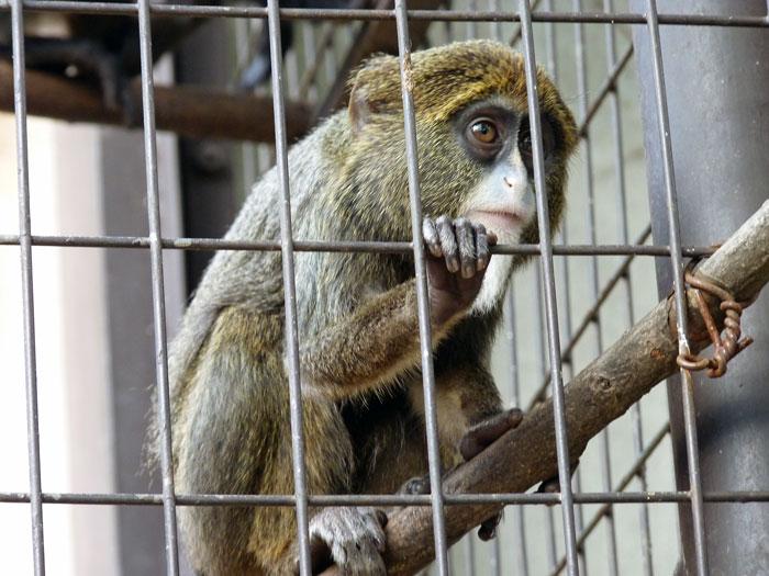 動物園の猿の拡大写真