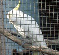 動物園の白い鳥(オウム)
