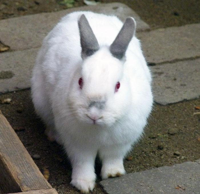 かわいい白いウサギの拡大写真