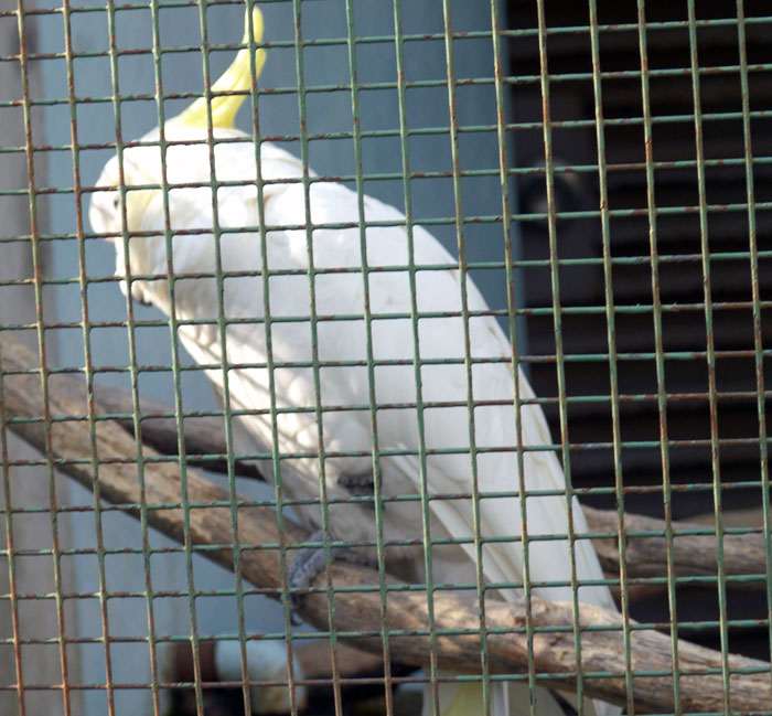 動物園の白い鳥(オウム)の拡大写真