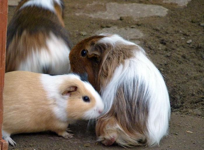 かわいいベージュと白のウサギの拡大写真