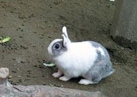 白とグレーのかわいいウサギ