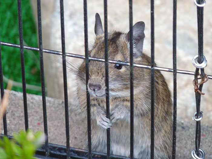 かわいいネズミさんの拡大写真