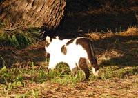 夕日に照らされながら森を走り去っていく猫