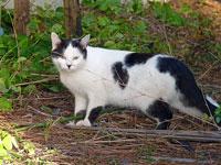 白と黒の野生の猫