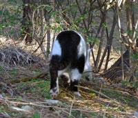 トボトボと森を歩く猫の後姿